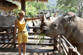 Nosorožec černý — Stock fotografie