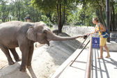 Mujer alimentación elefante — Foto de Stock