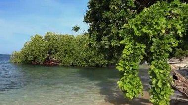 Mangrove trees on the beach — Stock Video