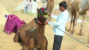 Camel fair — Stockvideo