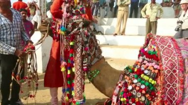 Decorate camel — Stock Video