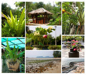Tropical plants and landscapes  — Stock Photo