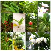 Tropical plants and flowers — Stock Photo