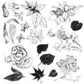 Sketches of flowers — Stock Photo