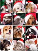 Dog and cat with santa hats — Stock Photo