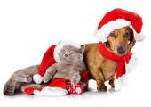 Christmas cat and dog — Stock Photo