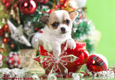 Puppy christmas chihuahua in cup — Stock Photo