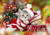Christmas kitten — Stockfoto