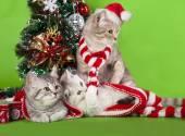 Kitten christmas wearing santa hat — Foto de Stock