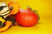 Autumn with seasonal pumpkin — Stock Photo