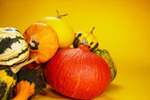 Autumn with seasonal pumpkin — Foto de Stock