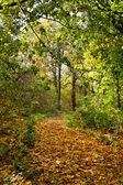 Autumn park alley — Stock Photo
