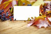 Blank card amongst autumn leaves — Stock Photo