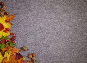 Autumn abstract grey background — Stock Photo