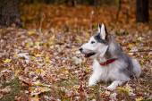 Dog on autumn walk — Stock Photo