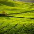 Beautiful green hills in Tuscany — Stock Photo #69891457