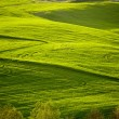 Beautiful green hills in Tuscany — Stock Photo #69891489