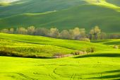 Beautiful green hills in Tuscany — Stock Photo