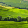Green tuscany hills — Stock Photo #74977973