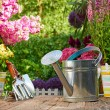 Gardening tools and flowers  on the terrace — Stock Photo #75608507