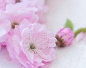 Pink flowers close-up on wooden background — Stock Photo