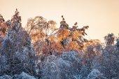 Zima piękny zachód słońca — Zdjęcie stockowe