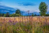 Evening in field — Stok fotoğraf