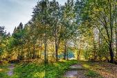 Yaz orman — Stok fotoğraf