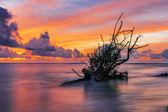 Dead tree trunk on tropical beach  — Stock Photo