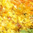 Autumnal leaves — Stock Video #54841805