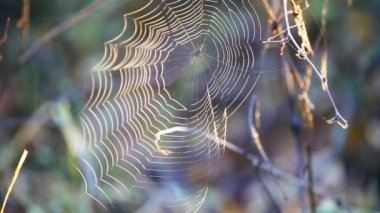Web spider at wind — Stock Video