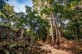 Bosque de selva en el área de angkor wat — Foto de Stock