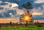 Sunset in summer field  — Stock Photo