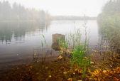 Lago autunnale nei pressi del bosco nella nebbia — Foto Stock