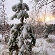 Small fur-tree in snow on sunset — Stock Photo #77422786