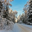 Winter forest — Stock Photo #80324168