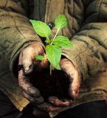 Hands holding green sapling with soil — Stock Photo