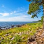 Coastline of Baltic Sea. Estonia — Stock Photo #63451925