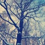 Winter snow oak tree on a blue sky background — Stock Photo #63138819