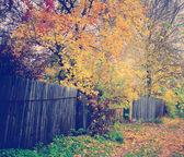 Autumn Pathway — Stock Photo