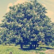 Chestnut tree with white flowers and blue sky — Stock Photo #74169147
