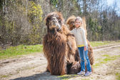 Little girl stroking two-humped camel — Stockfoto