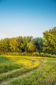 Russian field and forest — Stockfoto