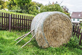 Hay is grass — Stock Photo