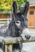 Mule — Stock Photo