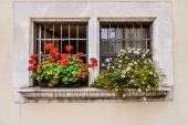 Old window with florist — Stock Photo