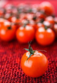 Branche of red tomatoes — Stock Photo