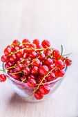 Sprigs of red currant — Stock Photo