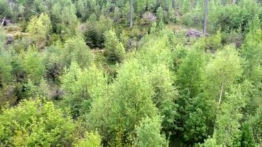 Top view of a mixed forest — Stock Video