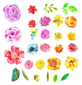 Beautiful Watercolor flower set — Stock Vector